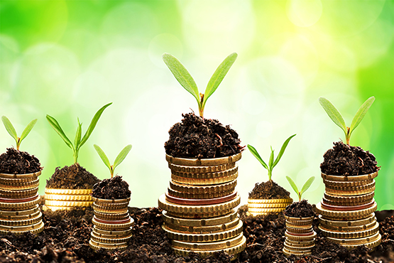 etairia_plant_coins