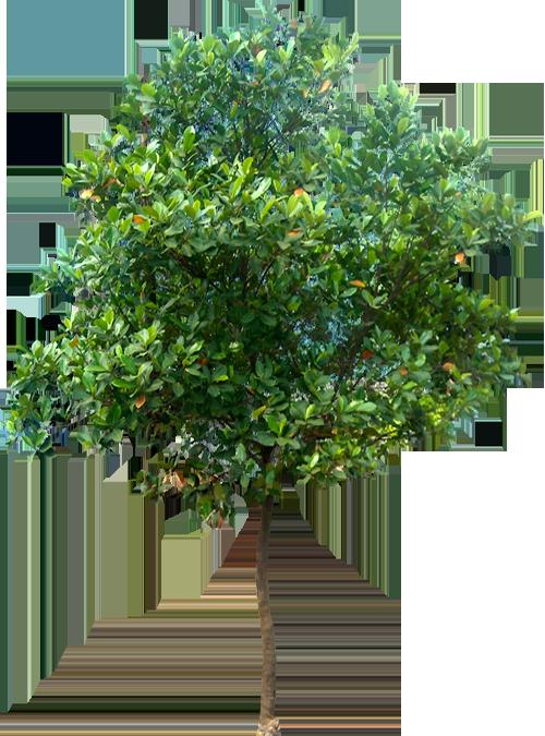 tree-home
